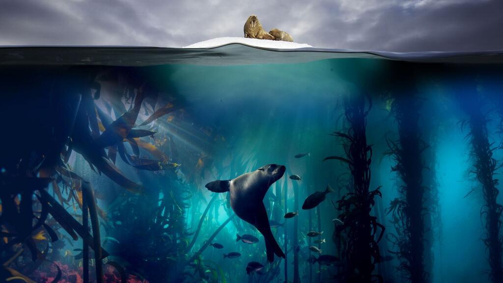 豆瓣评分9.9,美到令人窒息的海洋童话——《蓝色星球II》