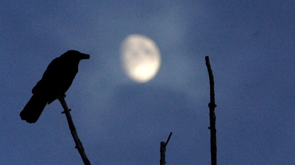 爱,可以解除诅咒——童话《三只乌鸦的故事》