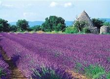 En Provence