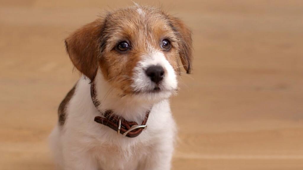 养一只过度焦虑的狗子是一种什么体验?