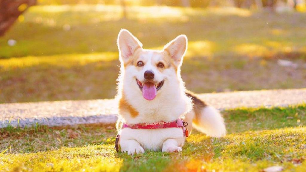 虐狗事件频发,动物到底有没有权利?