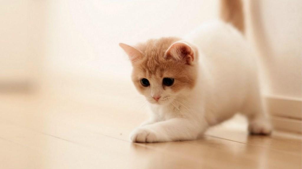 好奇害死猫?😹